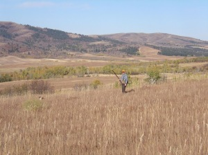 Andy and Sunny hunt the rolling CRP fields in search of sharptails.