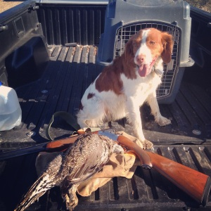 At four years old, Misty has become a pretty good bird dog.