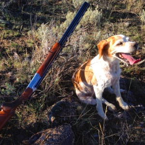 Sunny Girl.  No dog ever loved the hunt more.