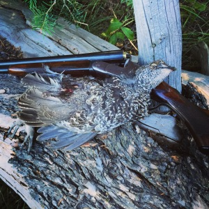 Blue grouse and the NID.